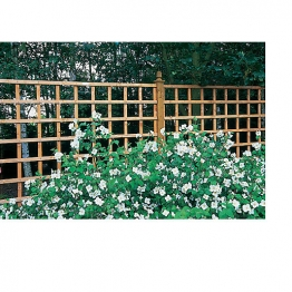 Trellis Pane Dip Treated 915mm X 1828mm